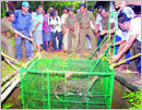 Udupi: Leopard rescued from well, released to National Park