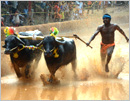 Kambala season resumes with Baaradi Kamabala in Karkal