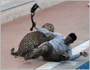 Leopard enters Bengaluru school, injures two