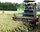 Bantwal: Voluntary labor transforms barren land at Brahmarakootlu; 5 tons paddy harvested