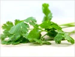 Coriander�s numerous health benefits