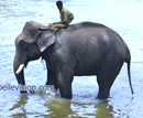 Udupi: Buddhist Settlement and Dubare Elephant Camp-Destinations of Lions Club Moodubelle Tour of Ma
