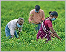 Are the agriculture reforms pro-farmer or anti-farmer?