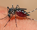 Dengue cases in Karavali may rise again
