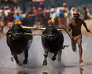 Kambala: Animal Welfare Board writes to DC