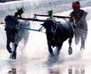 Udupi: DK Kambala Committee releases Official Time Schedule of 2014- 15