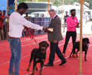 Mangaluru: City-folks display dogs during exhibition at National Canine Show