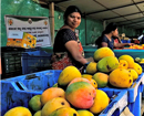 Mangaluru: Mango-lovers can buy varieties direct from growers at Mango Fest from Mar 24 to 26