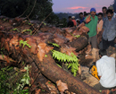 Bantwal: Huge tree uproots on train track between Mangaluru - Bengaluru at Kuppila, owing to rains